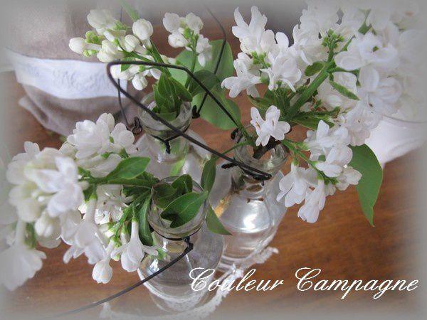 Joli lilas de mai couleur campagne - Au jardin de mon pere les lilas sont fleuris ...