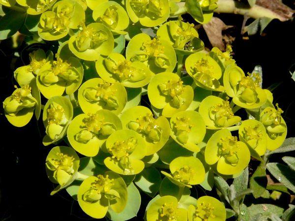Succulentes03