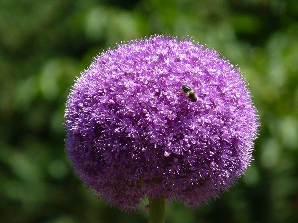 Ail-purple sensation 11