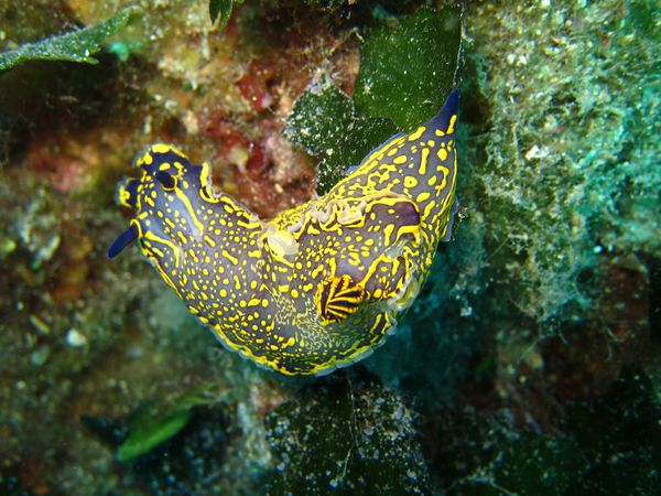 Nudibranches-2 2629