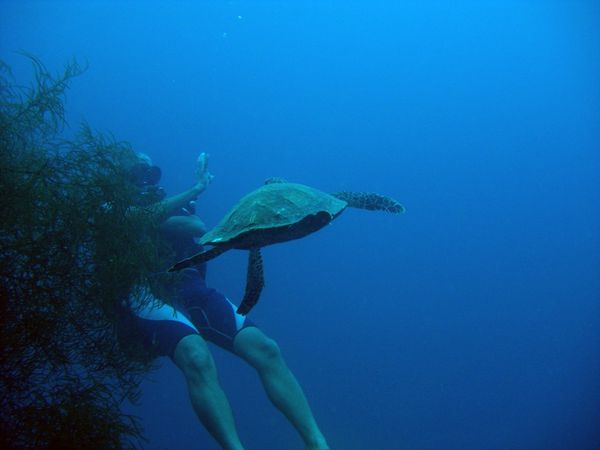 2010-03-10 tortue (3)