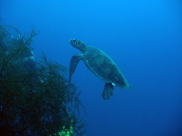 2010-03-10 tortue (4)