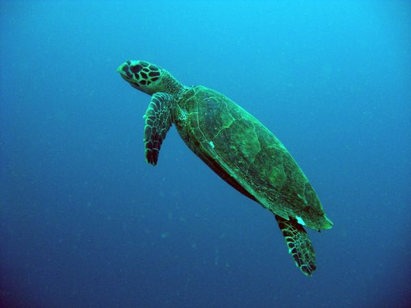 2010-03-10 tortue (5)
