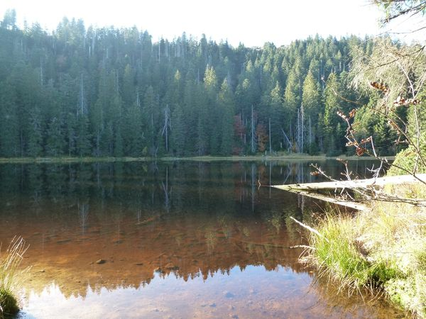 Wildsee 11