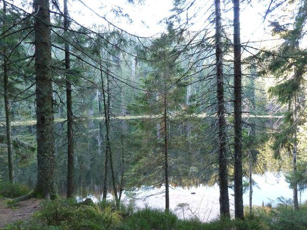 Wildsee 26