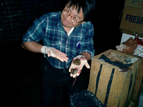 Hill Nate 2007 The chinatown Garbage Taxidermy tou-copie-2
