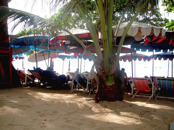 Dongtan beach Plage arbres (4)