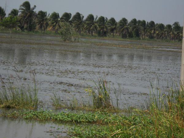 innondation (2)