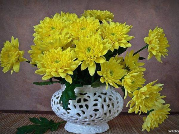 yellow-chrysanthemums-in-a-white-vase_1024x768_sc.jpg