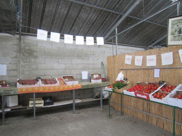 fraises-2013-002.JPG