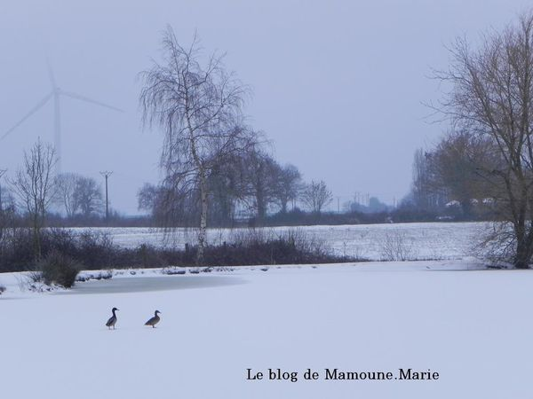 2eme vague de neige