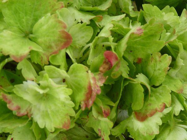 Floraison-Aout-2011-096.jpg