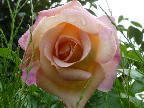 Floraison-Aout-2011-052.jpg