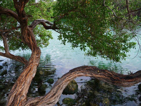 Jour 11 Cancun rivière 2