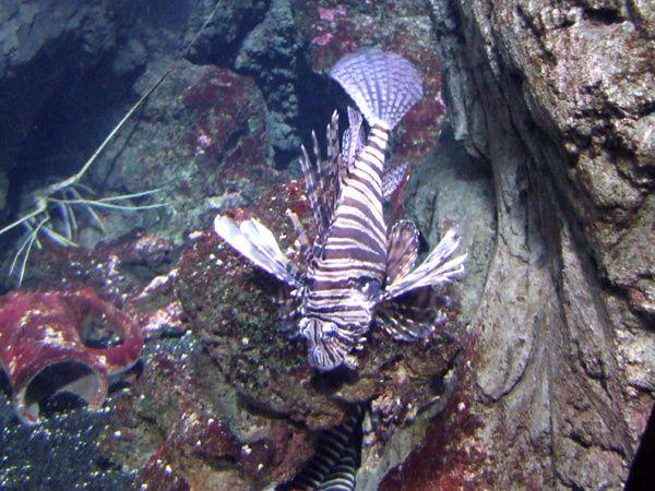 aquarium de Paris (56)