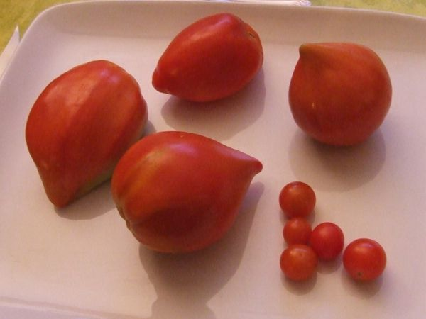 fin saga tomates 2014 (6)
