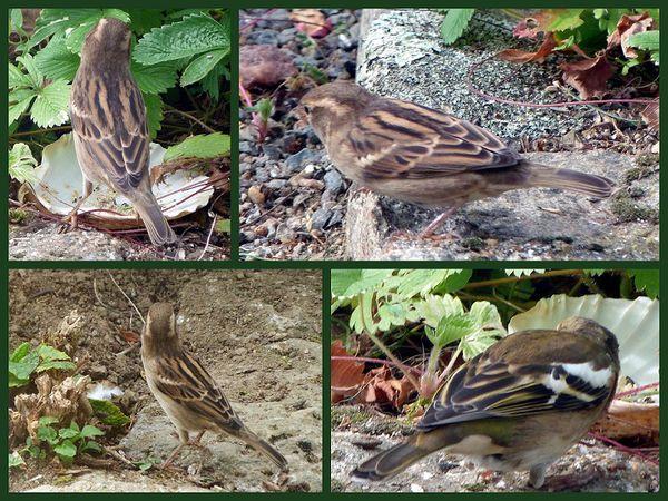 oiseaux-jardin.jpg