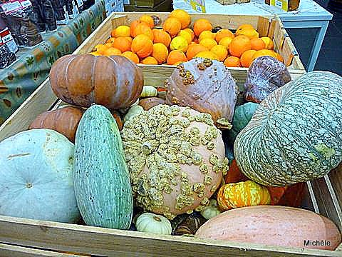 v06---Courges.JPG