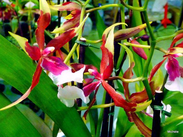 w02---Des-orchidees.JPG