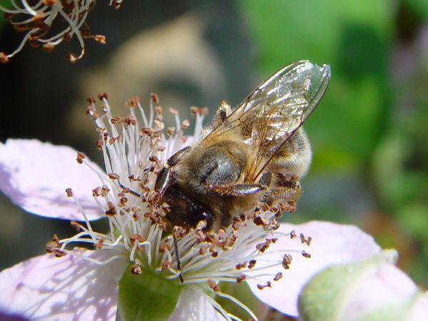 insecte1