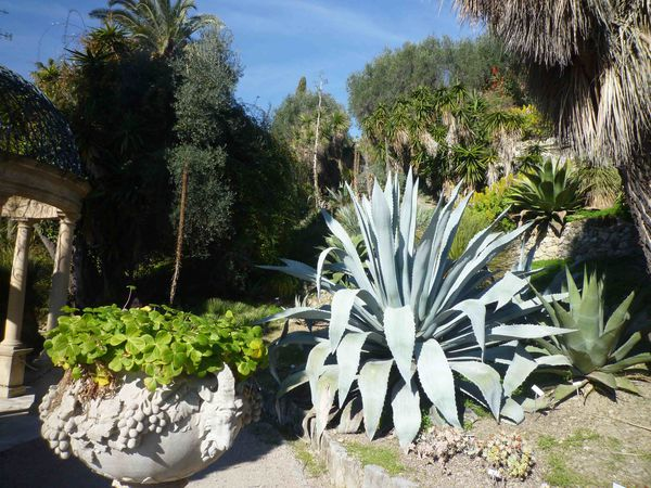 JARDINS HANBURY AGAVES GIGANTESQUES