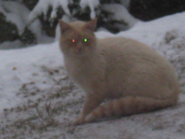 2010 neige 2280