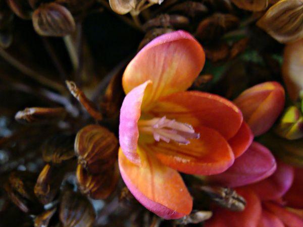 2013-02-23 bouquets 040bis