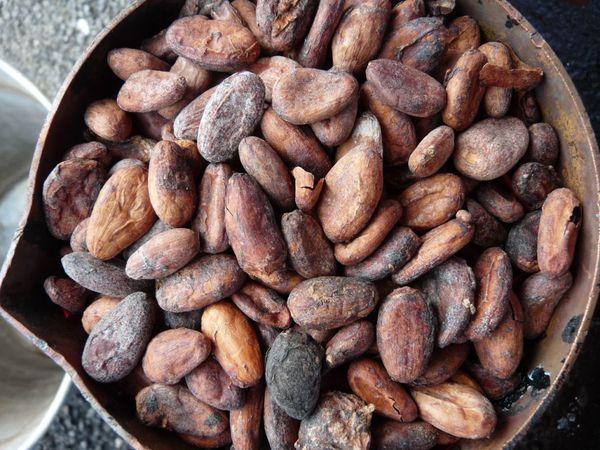 cacao--Glaise--2-.JPG