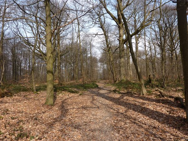 foret marly (2)