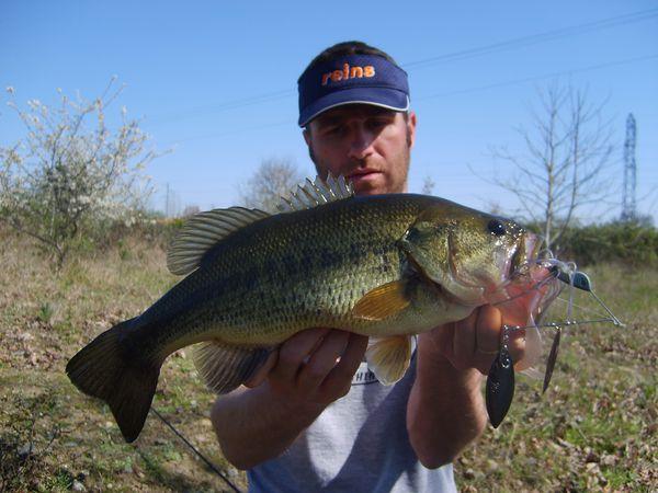 bass 028