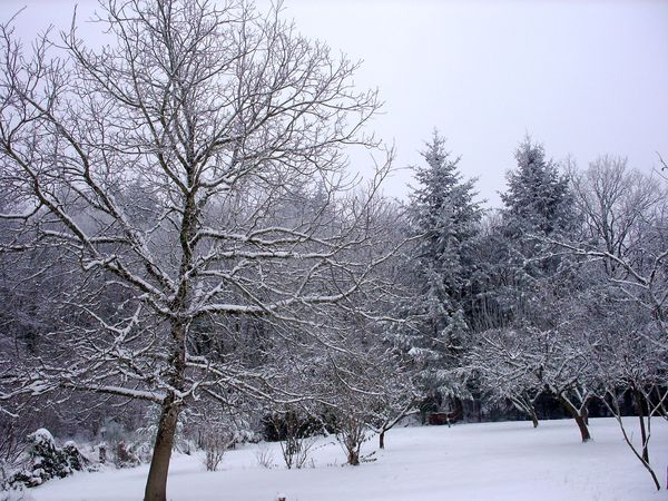 Neige-Limousin-dec-2009 6401