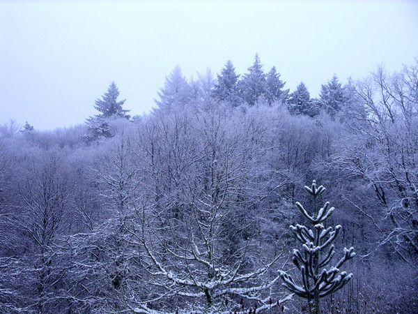 Neige-Limousin-dec-2009 6419