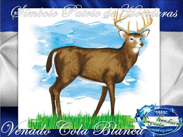 El-Venado-Cola-Blanca-Simbolo-Patrio-de-Honduras-1-Tegusta-.jpg