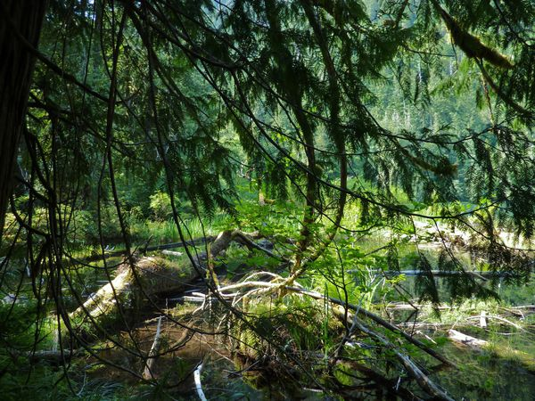 Jour 25 Cathedral Grove lac 2