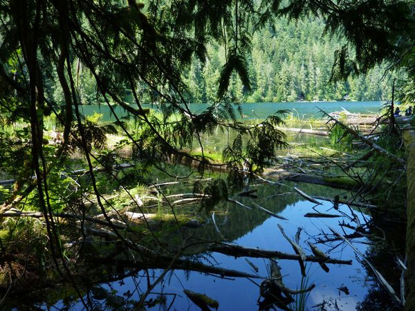 Jour 25 Cathedral Grove lac