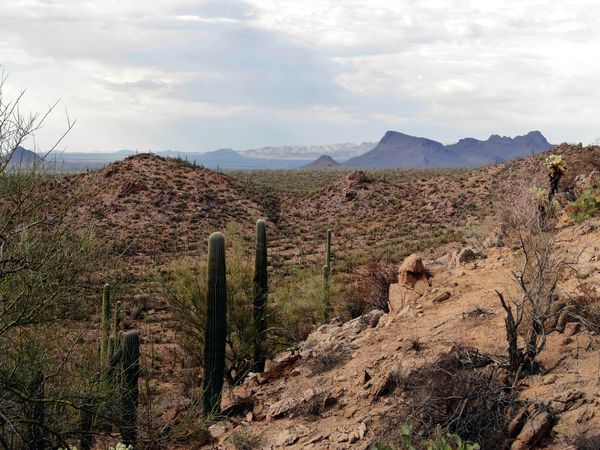 Tucson Saguaro NP 13b