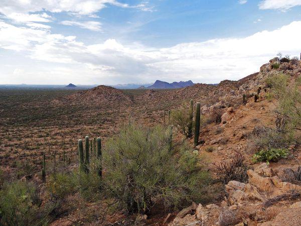Tucson Saguaro NP 6 b