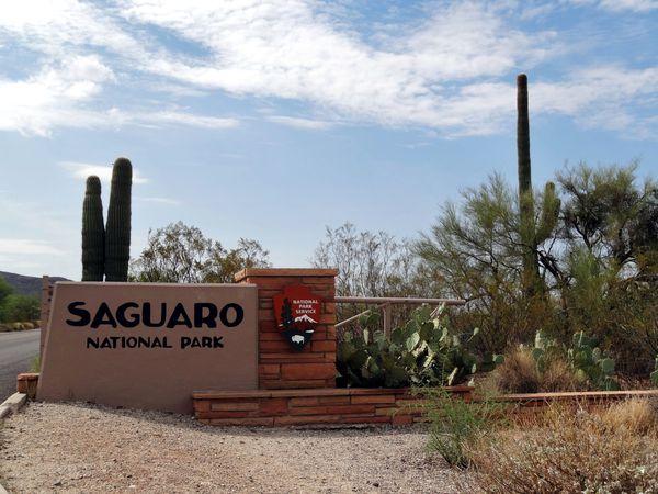 Tucson Saguaro NP Est Entrée b