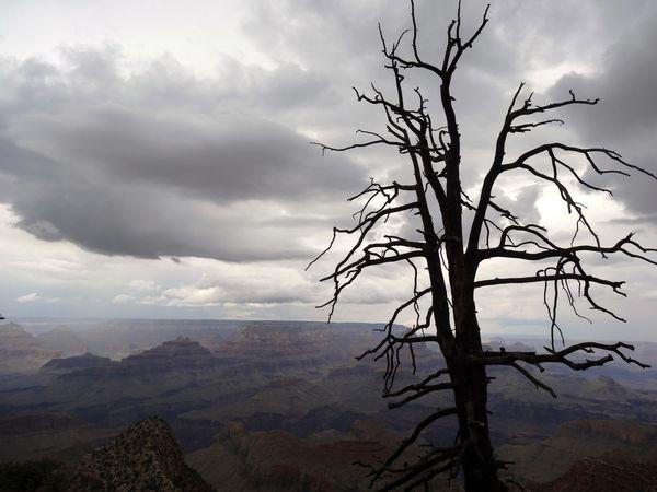Grand-Canyon-Grandview-point-arbre-1.jpg