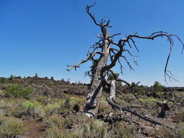Craters of the Moon Orchard Devil's garden 2
