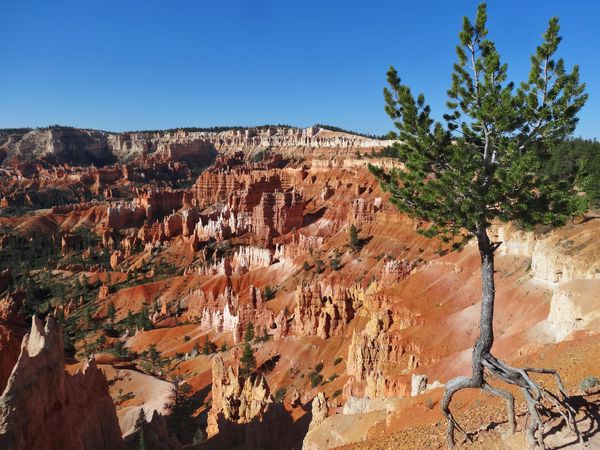 Bryce Canyon Sunrise Point 1