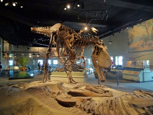 Chicago-Field-Museum-Daspletosaurus.jpg