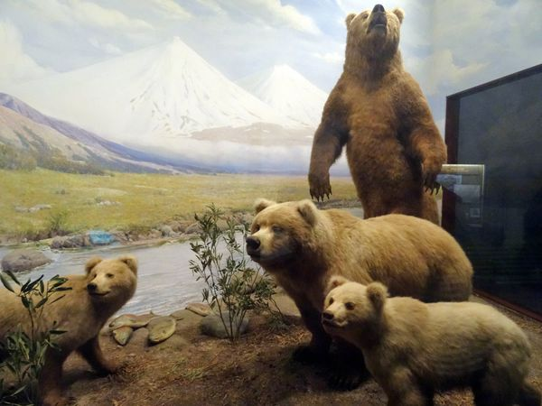 Chicago-Field-Museum-Grizzlis.jpg