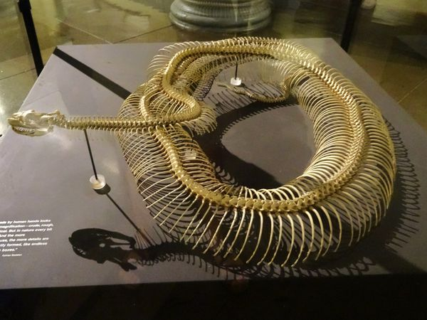 Chicago-Field-Museum-serpent.jpg