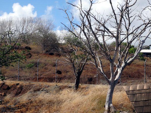Marquises-Nuku-Hiva-7-arbres-morts.jpg
