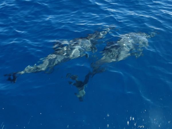 Papeete dauphins 2