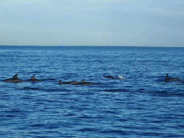Papeete dauphins 5