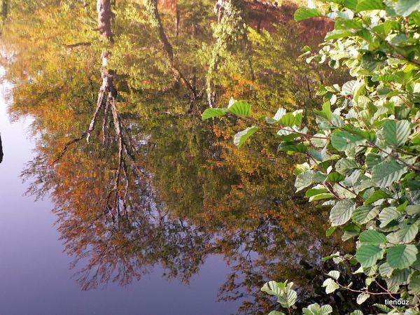 étang St Denis 87