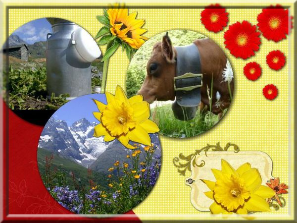collage 2012-03-22 16-46-54.pphoto filtre
