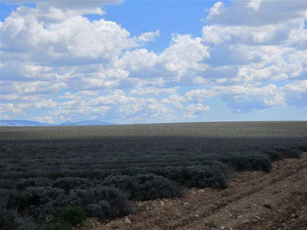2012-03-6379-lavandes-1.JPG